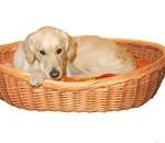 En hund skal have en hundekurv (foto petworld.dk)