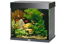 Et billigt akvarium virker helt fint (foto petworld.dk)