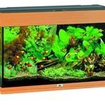 Akvariefisk er ren afslapning (foto petworld.dk)